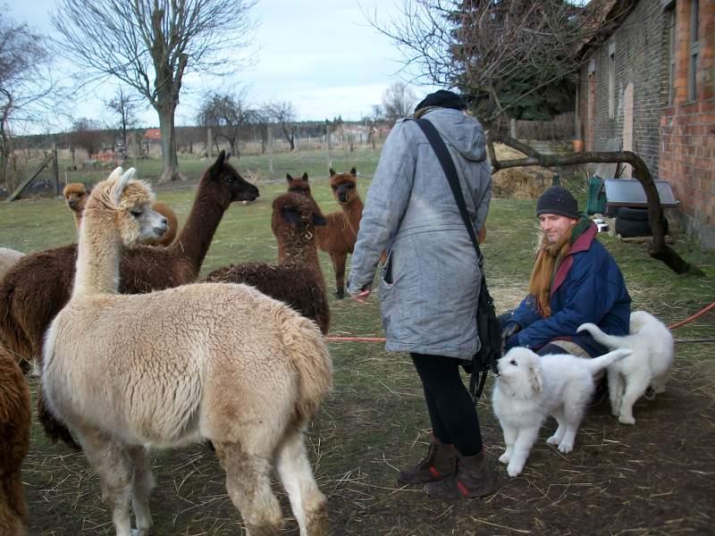 Ein Alpaka mit blondem Fell schaut zu, wie foxitalic sich zu zwei kleinen Hunden mit weißem Fell umdreht. Ein Hund zupft an der Umhängetasche von foxitalic. Bernd Lindemann kniet neben den zwei kleinen Hunden. Bernd Lindemann trägt eine blaue Jacke, einen Schal und eine graue Mütze.