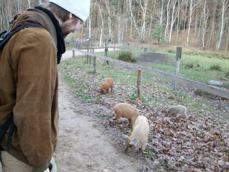 Mann in brauner Lederjacke und mit weißer Mütze betrachtet vier kleine Wollschweine, die am Rande eines unbefestigten Wegs im Laub stehen. Die Wollschweine haben (von links nach rechts) rotbraunes, hellbraunes, beiges und hellgraues Fell.